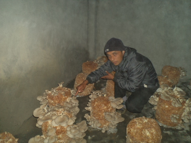 Mushrooms Are Growing And Selling Well Hope Disability
